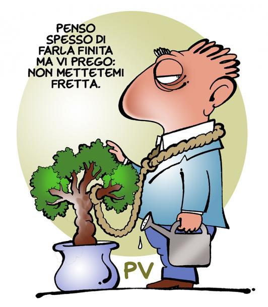 bonsai_low.jpg